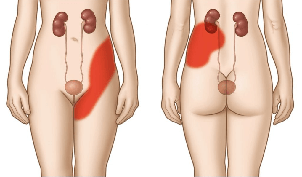 Тянет низ живота после месячных: естественные и патологические причины тянущей боли, терапия