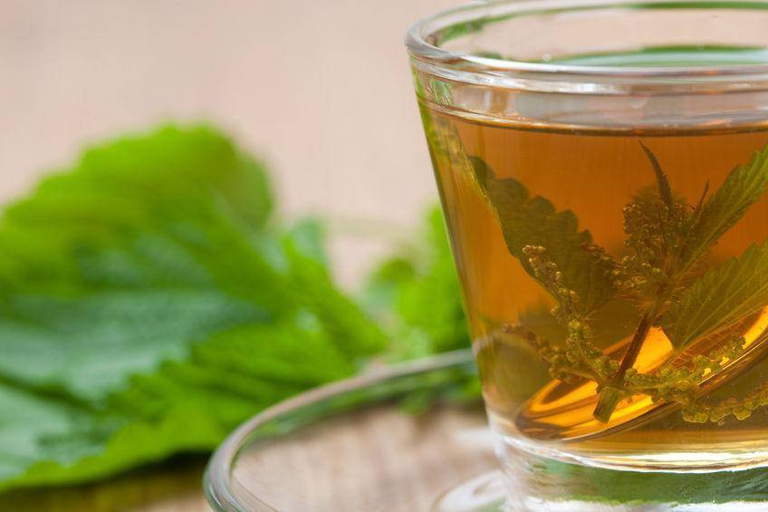 Подорожник от кашля: лечебные свойства, отвар и сок