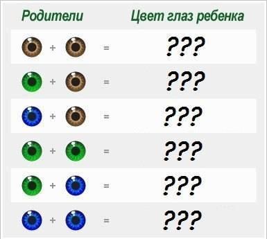 Каким будет цвет глаз у ребенка: таблица, как определить в домашних условиях