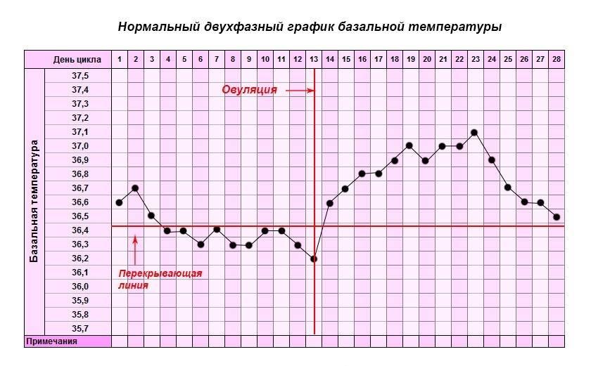 Базальная температура при беременности до задержки, график бт / mama66.ru