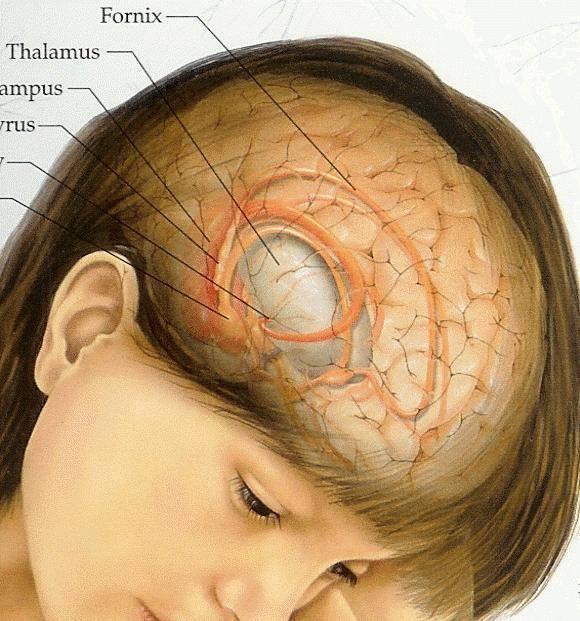 Нейробластома у детей — что это такое, выживаемость, лечение