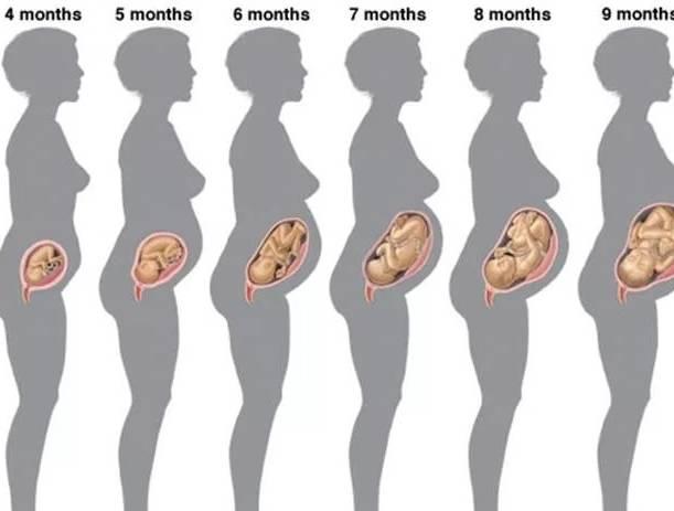 Первые шевеления плода при беременности