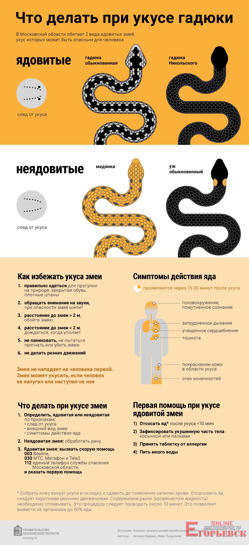 Что делать, если ребенка укусила гадюка: первая помощь при укусе змеи