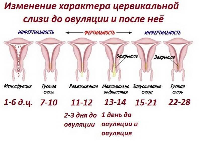 Зуд во время месячных: признаки заболеваний, диагностика, лечение