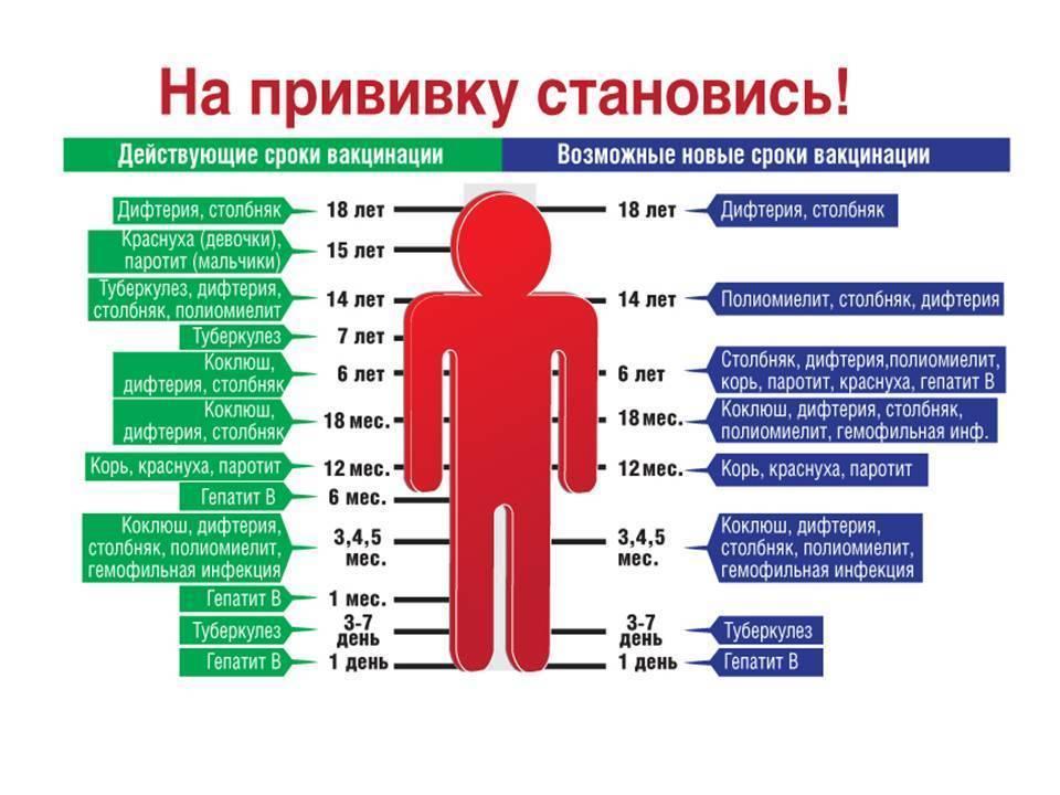 Прививка от кори взрослым: когда делается и сколько раз