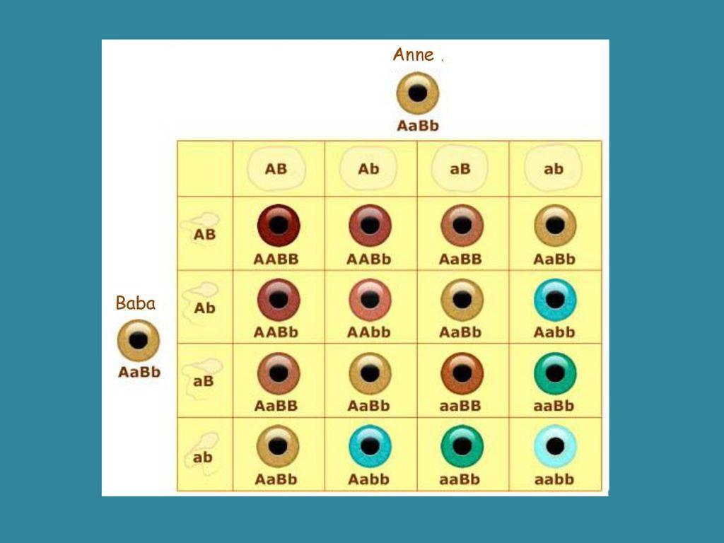 Голубые глаза у ребенка если у родителей. какой цвет глаз будет у новорожденного ребенка, если у родителей они карие, голубые или зеленые? многим известны самые распространенные цвета