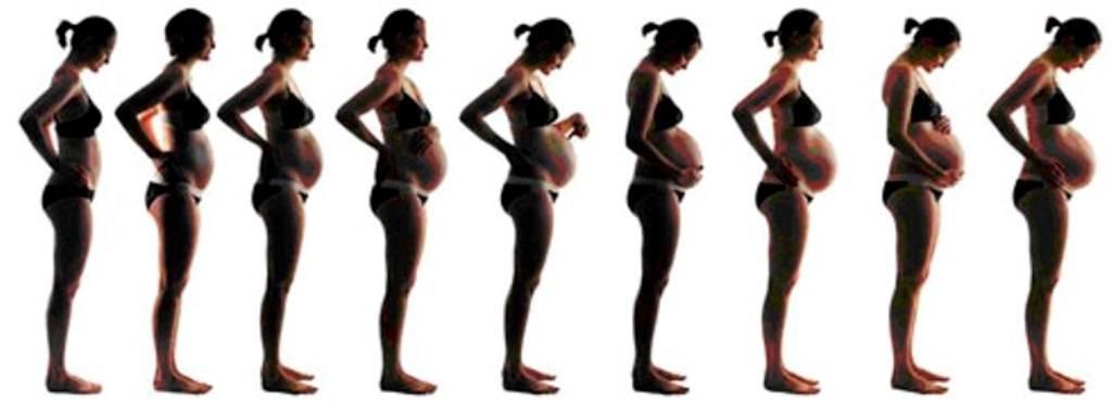 На каком сроке беременности живот начинает расти
