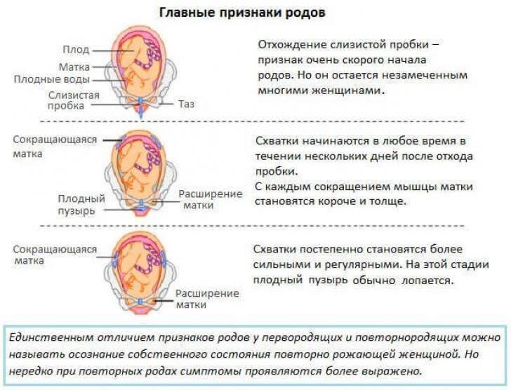 При отхождении пробки болит ли живот - все о беременности