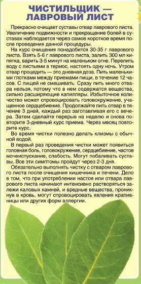 Как сделать выкидыши лавровый лист - healingcraft.ru