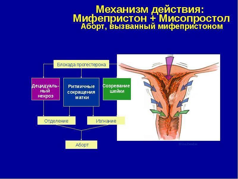Мифепристон: фармакологическое действие, инструкция и показания к применению