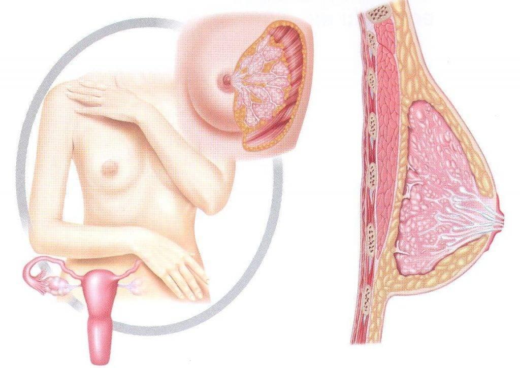 Почему возникают боли в груди за 7 дней до менструации