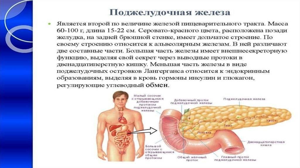 Поджелудочная железа, диета - что можно, что нельзя. совет врача