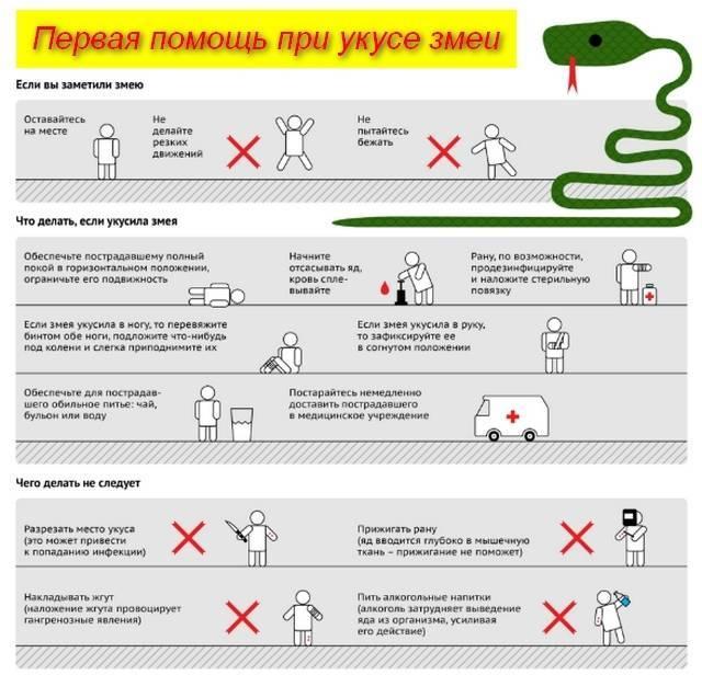 Если вас укусили. помощь при укусах насекомых, змей, животных