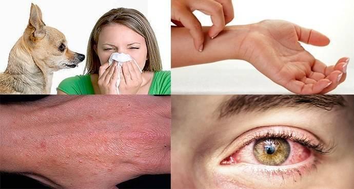 Как проявляется аллергия на собак у детей: симптомы и методы лечения
