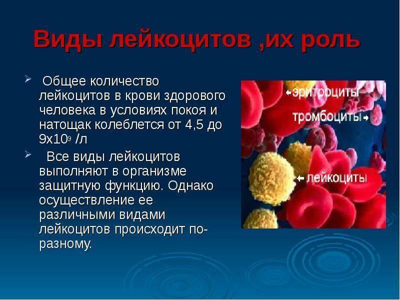 Повышенные лейкоциты у новорожденного ребенка причины и последствия