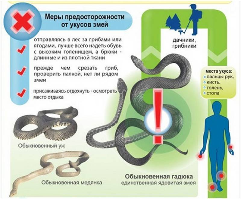 Укусы змей: профилактика укусов, первая помощь, противоядия и лечение