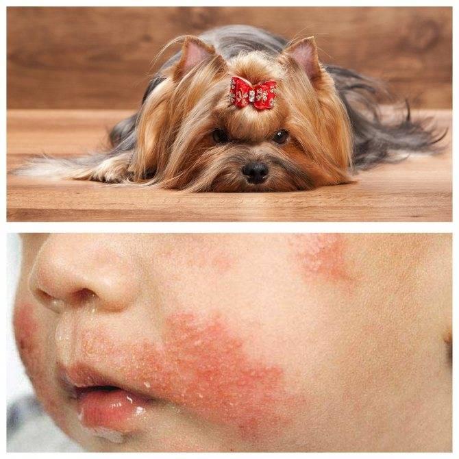 Аллергия на животных, как проявляется аллергия на шерсть животных?