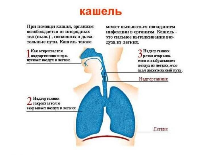 Сухой кашель ночью у детей: причины и лечение