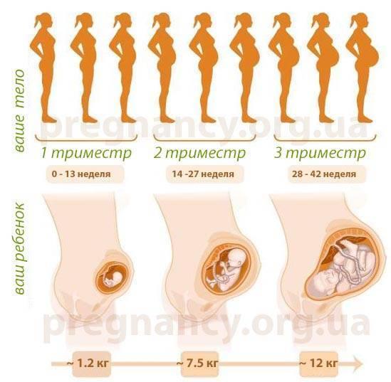 3 месяц беременности