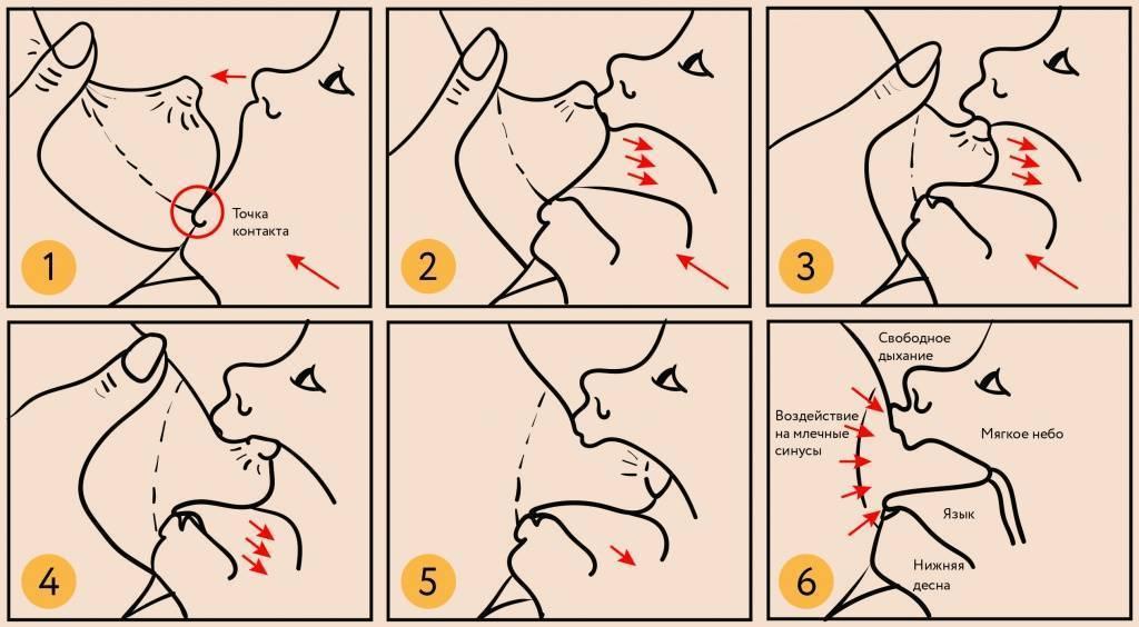 Техника грудного вскармливания. основные моменты кормления грудью