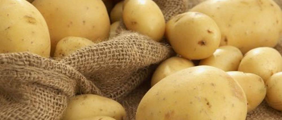 Можно ли картошку кормящим: в чем ее польза и вред. можно ли картошку кормящим и в каком виде её употреблять, не навредив малышу