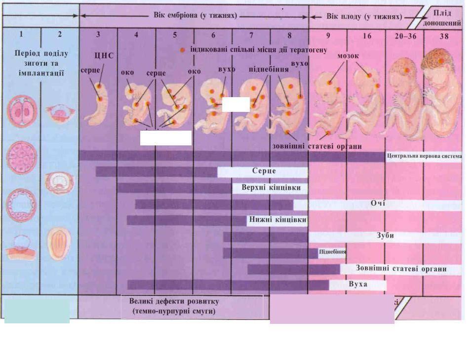 Поздняя имплантация эмбриона и хгч: при каком значении видно плодное яйцо на узи и как повышается содержание гормона в крови