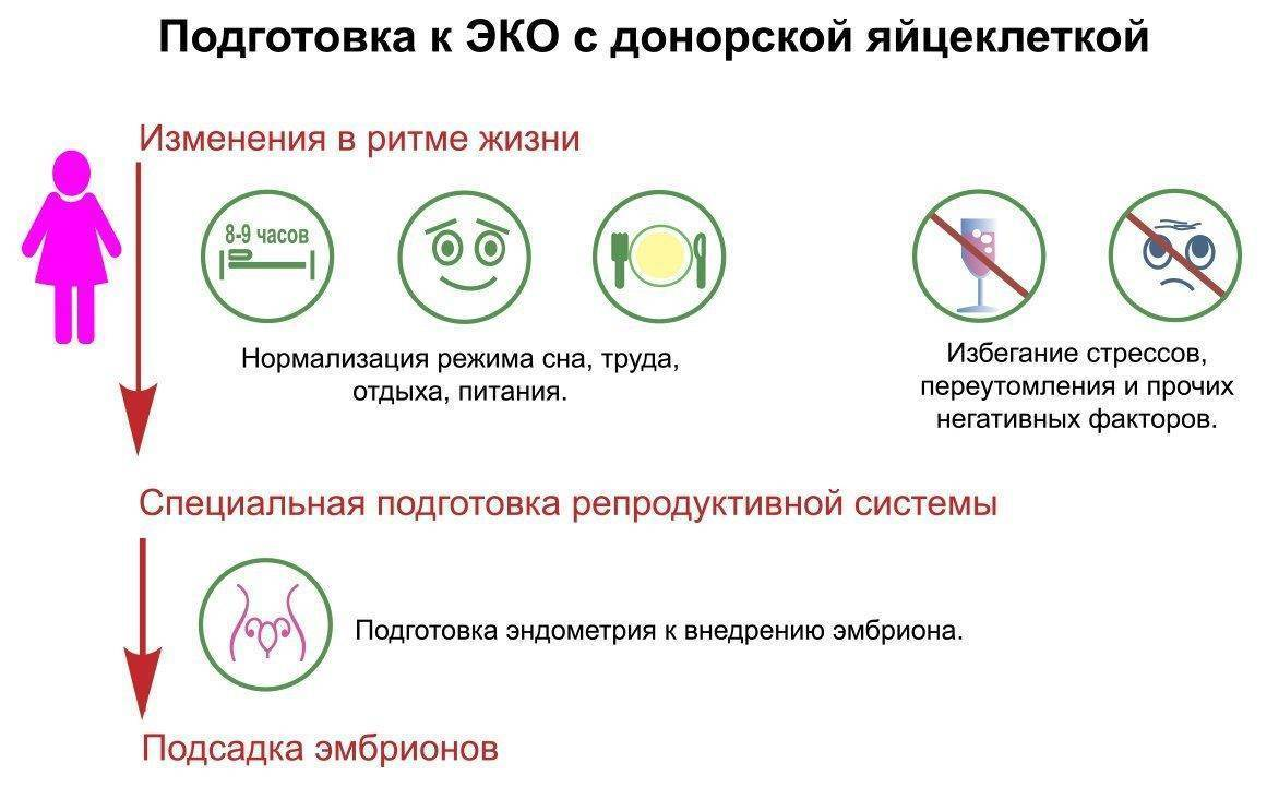 Использование донорских яйцеклеток при эко