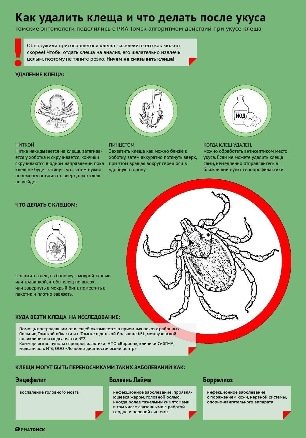 Укус клеща: что делать если укусил клещ. эффективное средство от клещей (фото)