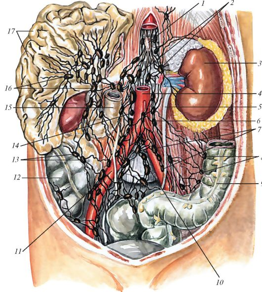 Увеличены лимфоузлы в брюшной полости у ребенка: причины и лечение