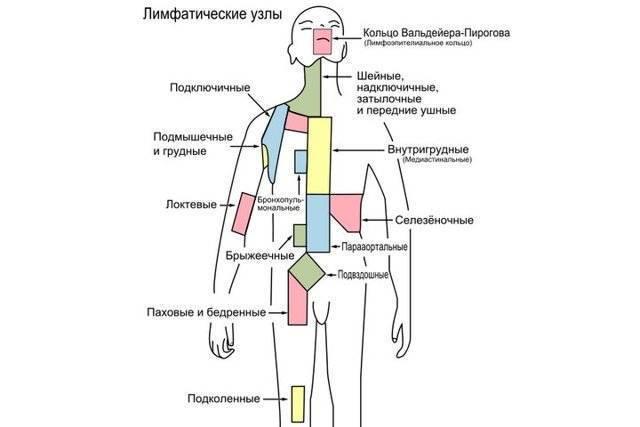 Мезентериальные лимфоузлы в брюшной полости. мезаденит у детей: причины, симптомы и лечение