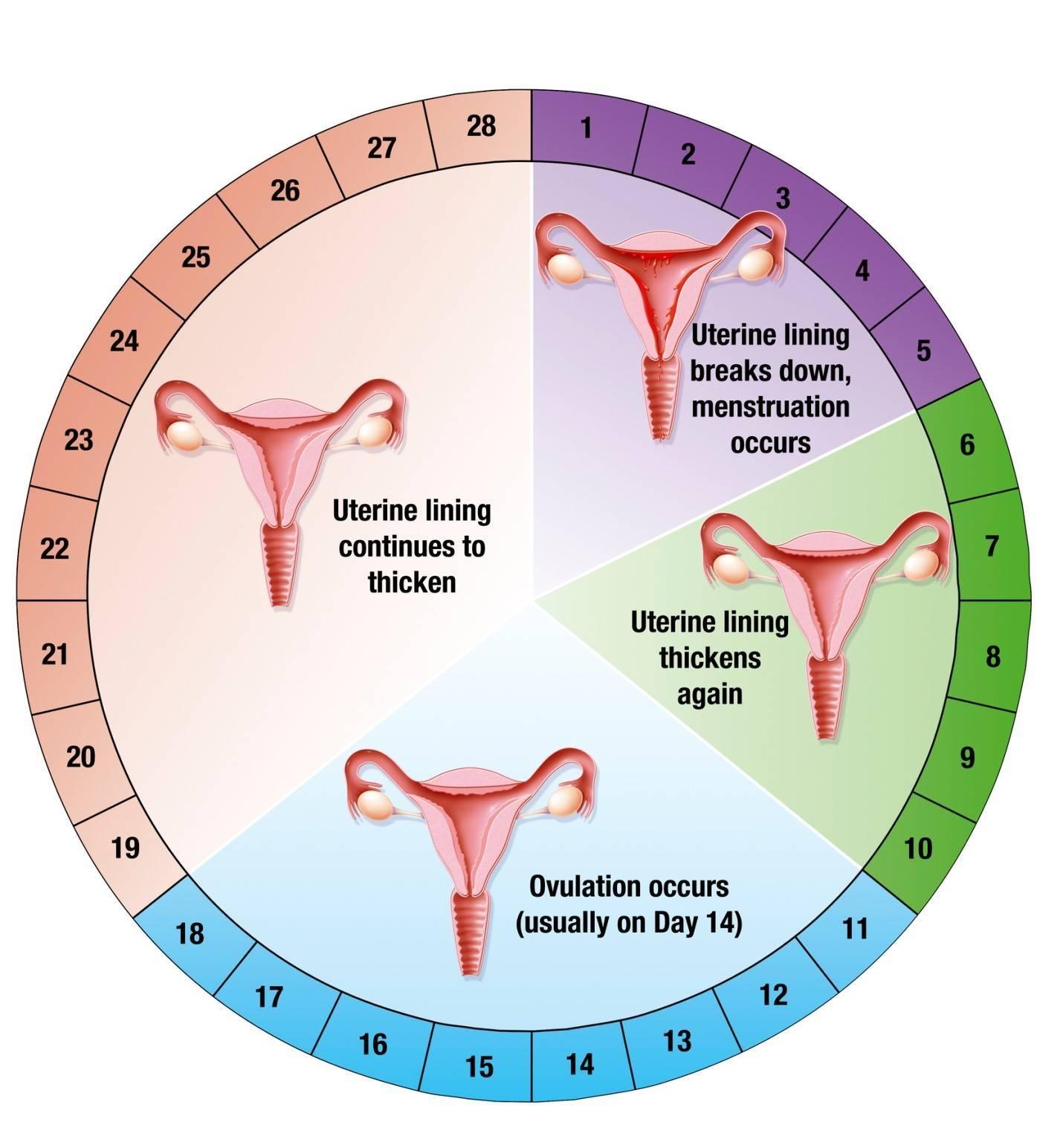 Сбой цикла месячных | симптомы, причины, лечение