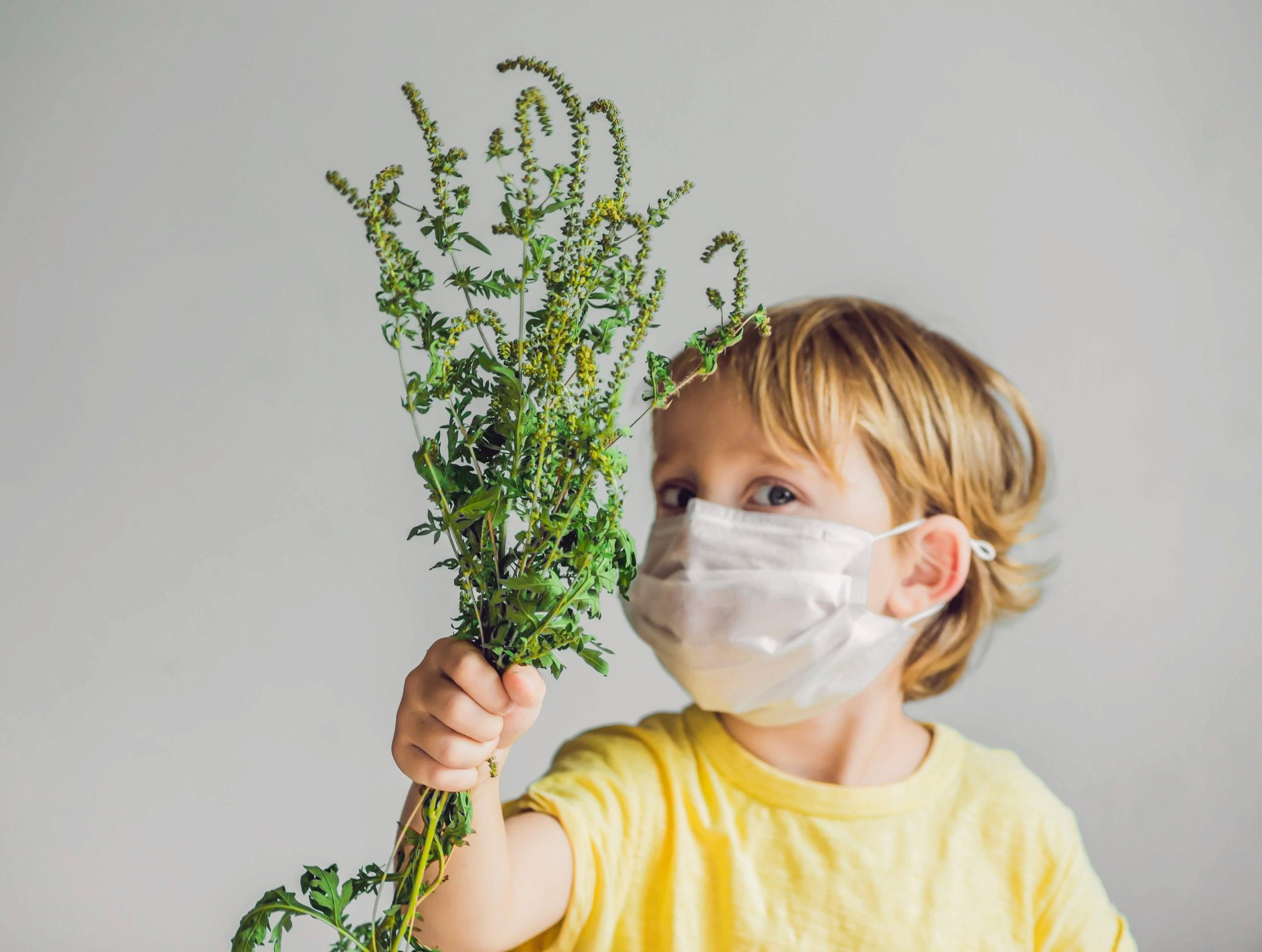 Аллергия на цветение – симптомы, лечение и профилактика