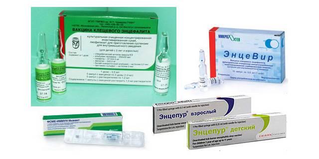 Вакцинация от клещевого энцефалита — зачем и кому она нужна, а также схема (график) прививок
