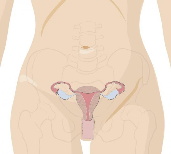 Шейка матки при беременности на ранних сроках