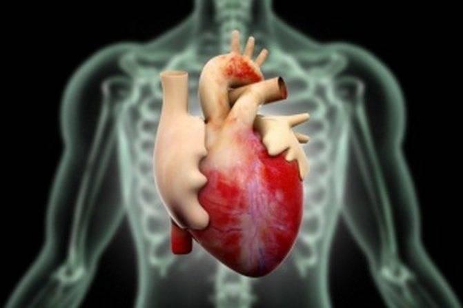 Функциональная кардиопатия у детей что это такое