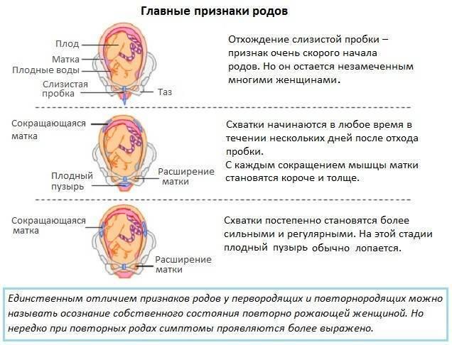 Понос перед родами: за сколько дней может начаться диарея у перво- и повторнородящих?