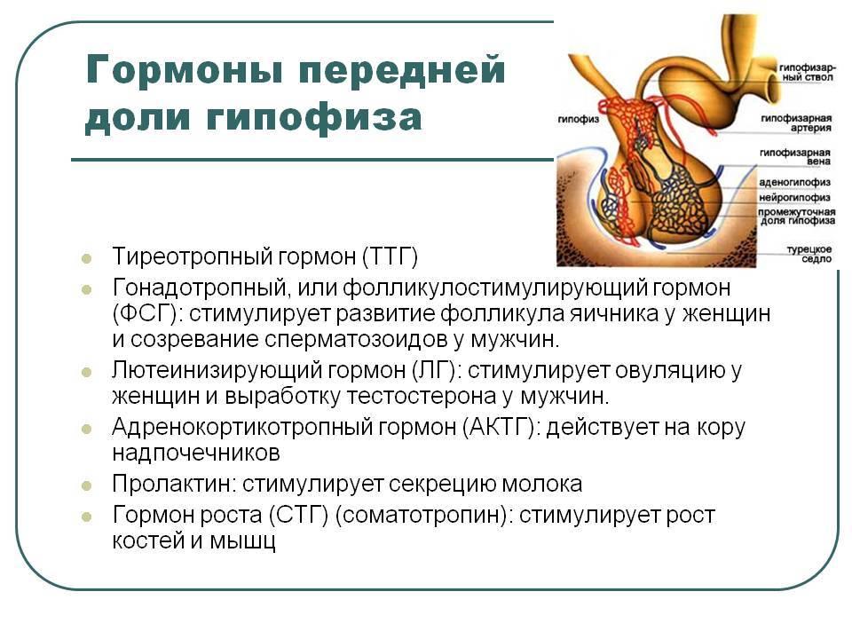 Ттг повышен: что это значит у женщин, последствия, как лечить и какому врачу обращаться