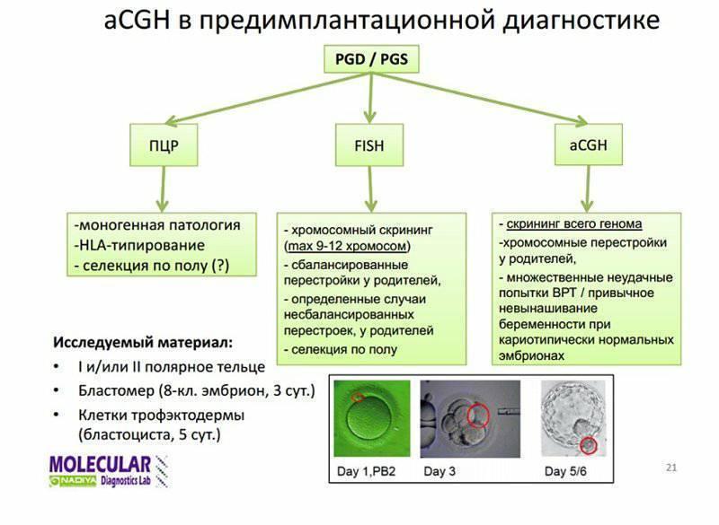 Предимплантационная диагностика эмбрионов (пгд): этапы процедуры