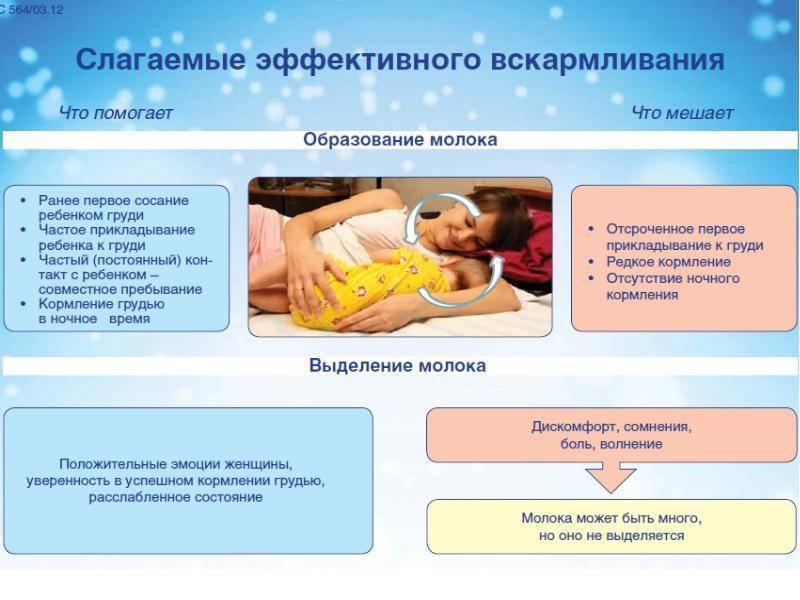 Комаровский о питании кормящей мамы по месяцам - основные принципы
