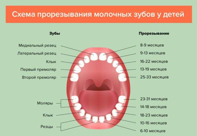 Температура при прорезывании зубов у детей: сколько держится