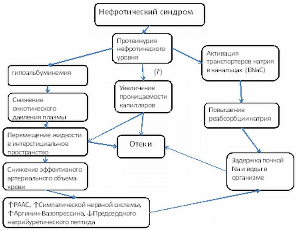 Нефротический синдром у детей: виды, в том числе врождённый, причины возникновения, симптомы, диагностика, лечение и профилактика + фото
