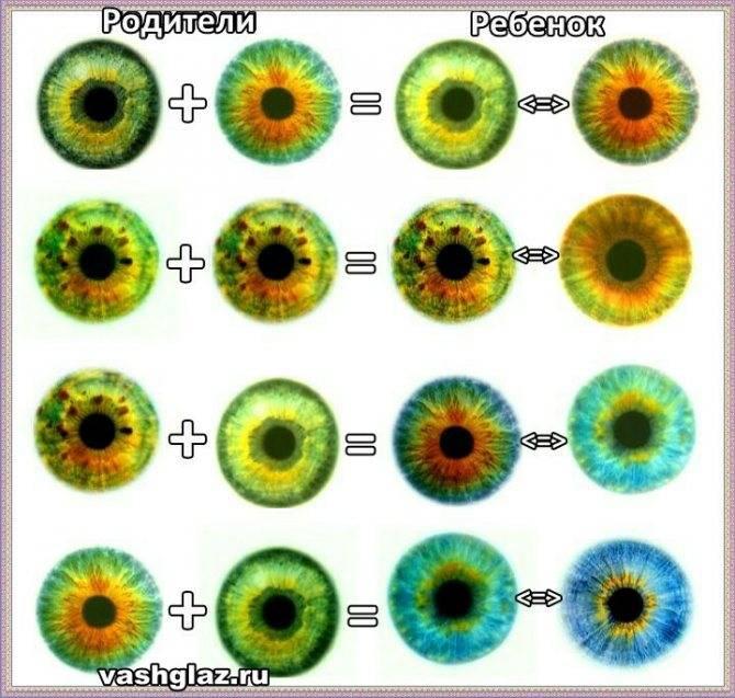 Таблица определения цвета глаз у ребёнка по родителям