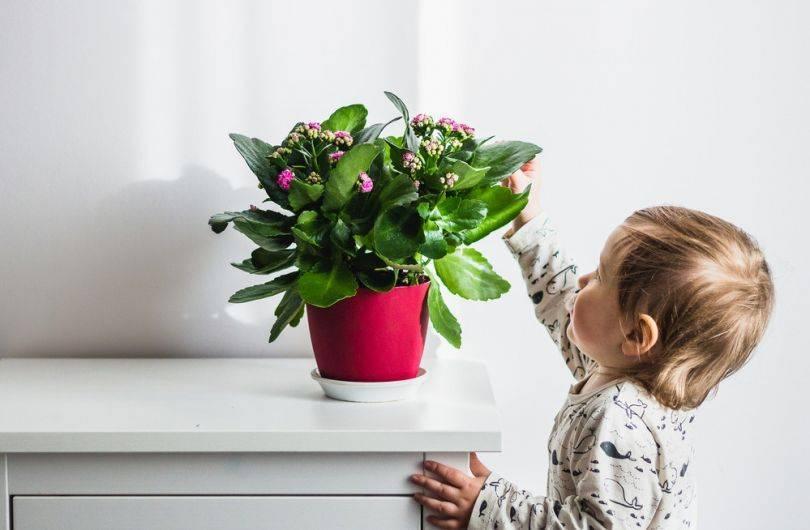 Растения для детской комнаты – какие цветы безопасны для юных исследователей | полезно (огород.ru)