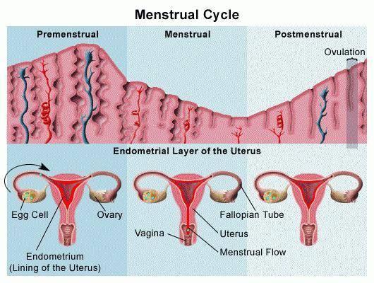 Менструальный цикл после родов