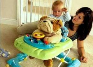 Со скольки месяцев можно сажать ребенка в ходунки, как выбрать, плюсы и минусы, польза и вред и прочее + фото и видео
