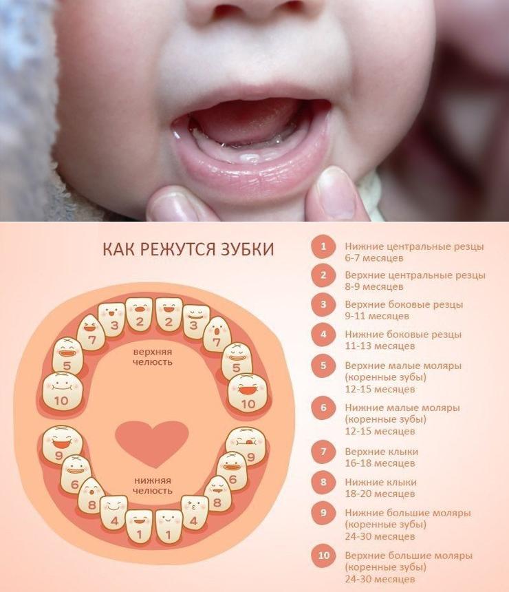 Во сколько месяцев  у ребенка режутся первые зубы