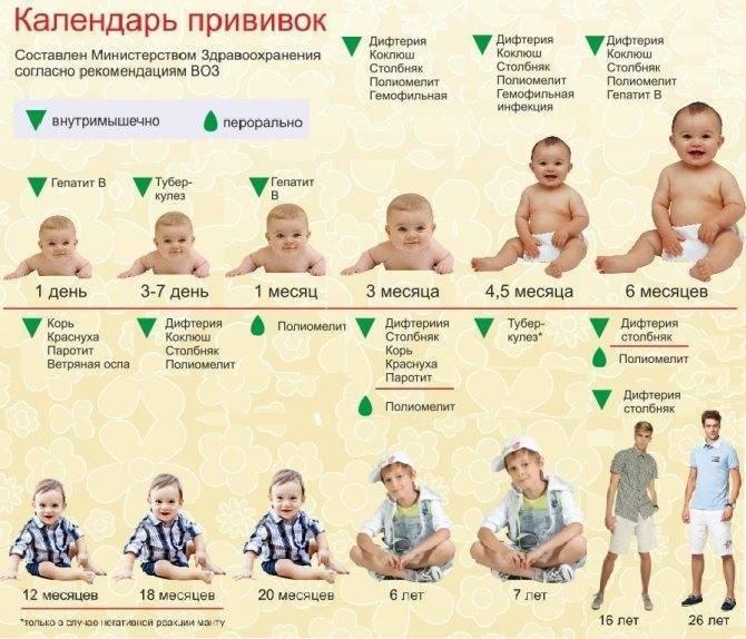 Прививка от краснухи взрослым: схема вакцинации, сколько действует, куда делают и нужна ли