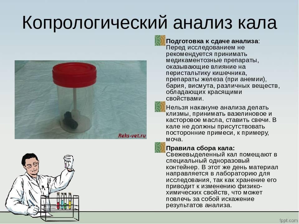 Как правильно сдать анализ на дисбактериоз кишечника у грудничка и расшифровать его результат — топотушки