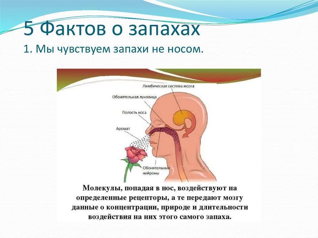 Неприятный запах из носа у ребёнка: возможные причины pulmono.ru неприятный запах из носа у ребёнка: возможные причины