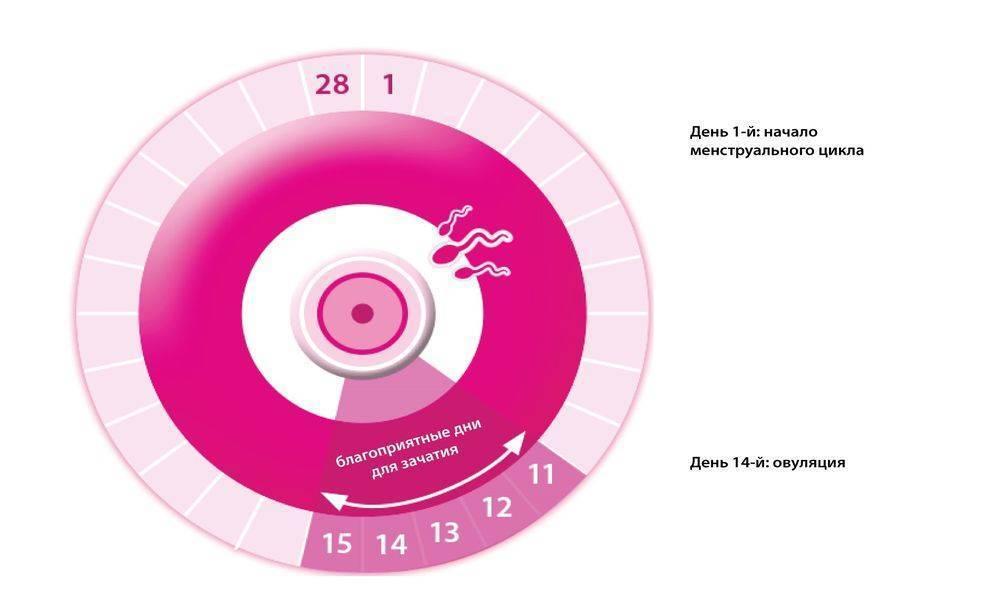 Календарь овуляции для зачатия: рассчитать дату, как при планировании ребенка узнать благоприятные дни, чтобы забеременеть, как быть в период нерегулярного цикла?